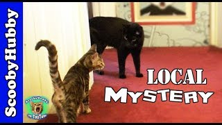 Local Mystery -- Cat Clips #39