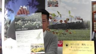 淡路島1月から2月の花水仙郷と冬咲きチューリップ 京都の旅行会社