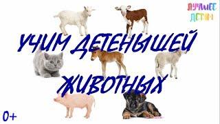 Детеныши животных. Учим детенышей животных для детей на русском / Лучшее детям