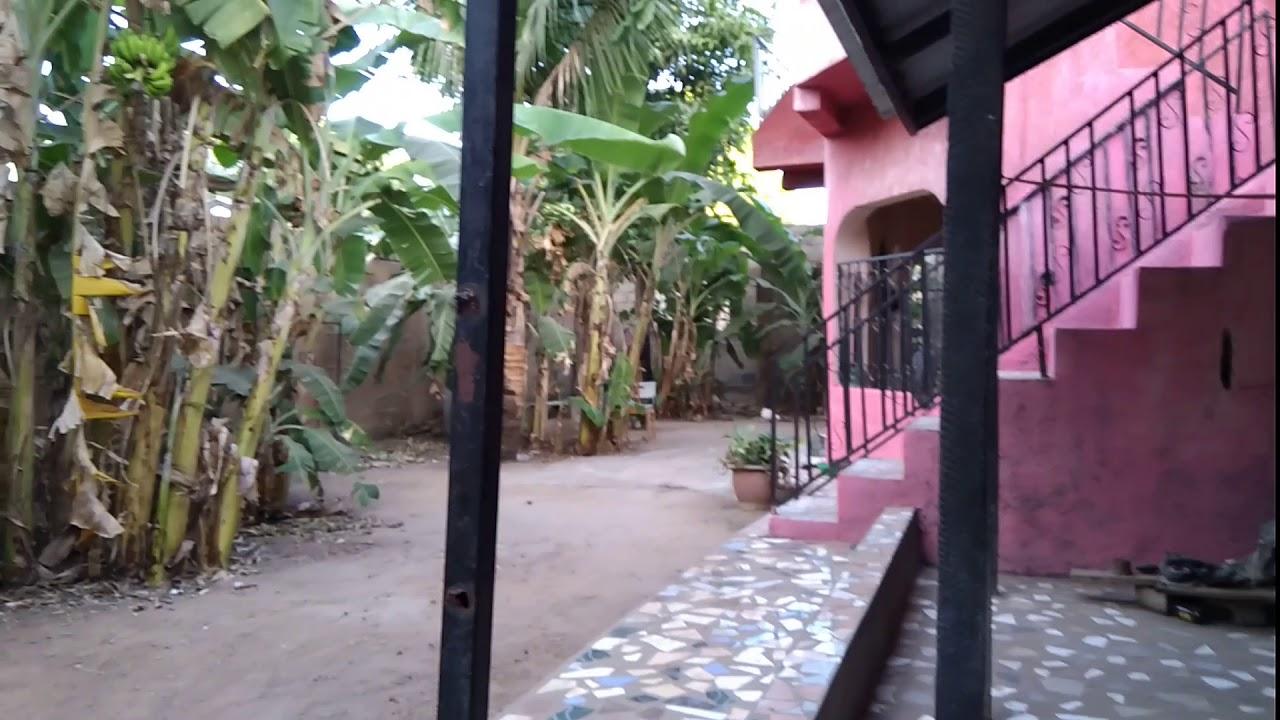 Banana Trees In The Backyard Youtube