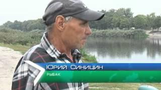 Массовый мор рыбы зафиксирован в реке Харькова.