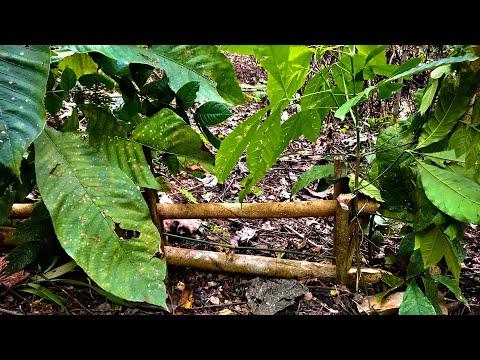 Sinh Tồn Trong Rừng | Tập 11 | Bẫy Thú Rừng Thủ Công Thô Sơ | Survival In The Forest
