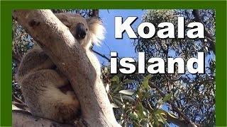 Koala Island - Raymond Island, Gippsland, Victoria State, Australia