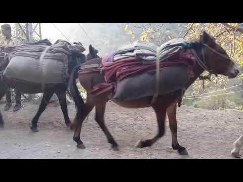 Transport condition in Neelam valley