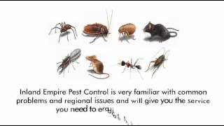 Bed Bug Control riverside, 909-824-4026 termite Inspections riverside county