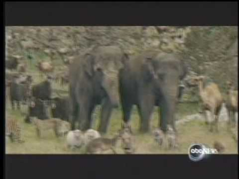 """ABC News - """"No Animals Were Harmed®"""" in Evan Almighty"""