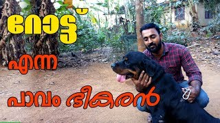 Rottweiler dog  l Dog farming kerala l The strong watch dog