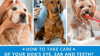How to Take Care of Your Dog's Health?