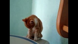 котенок геодезист в камералке(00999 ПЕТРИК ПЯТОЧКИН., 2016-03-23T20:45:33.000Z)