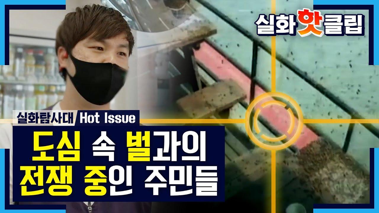 [실화탐사대] 주민들은 벌과의 전쟁 중, MBC 210619 방송