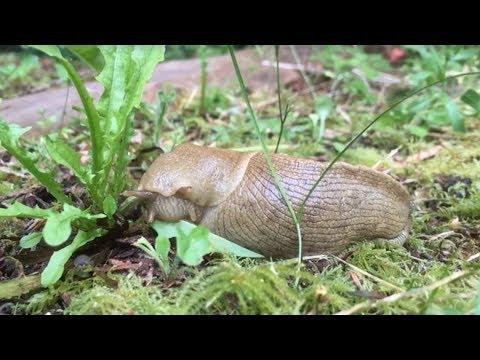Slug Life
