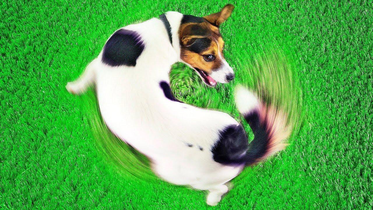 Por Qué Tu Perro Hace Eso: 10 Comportamientos Caninos Explicados