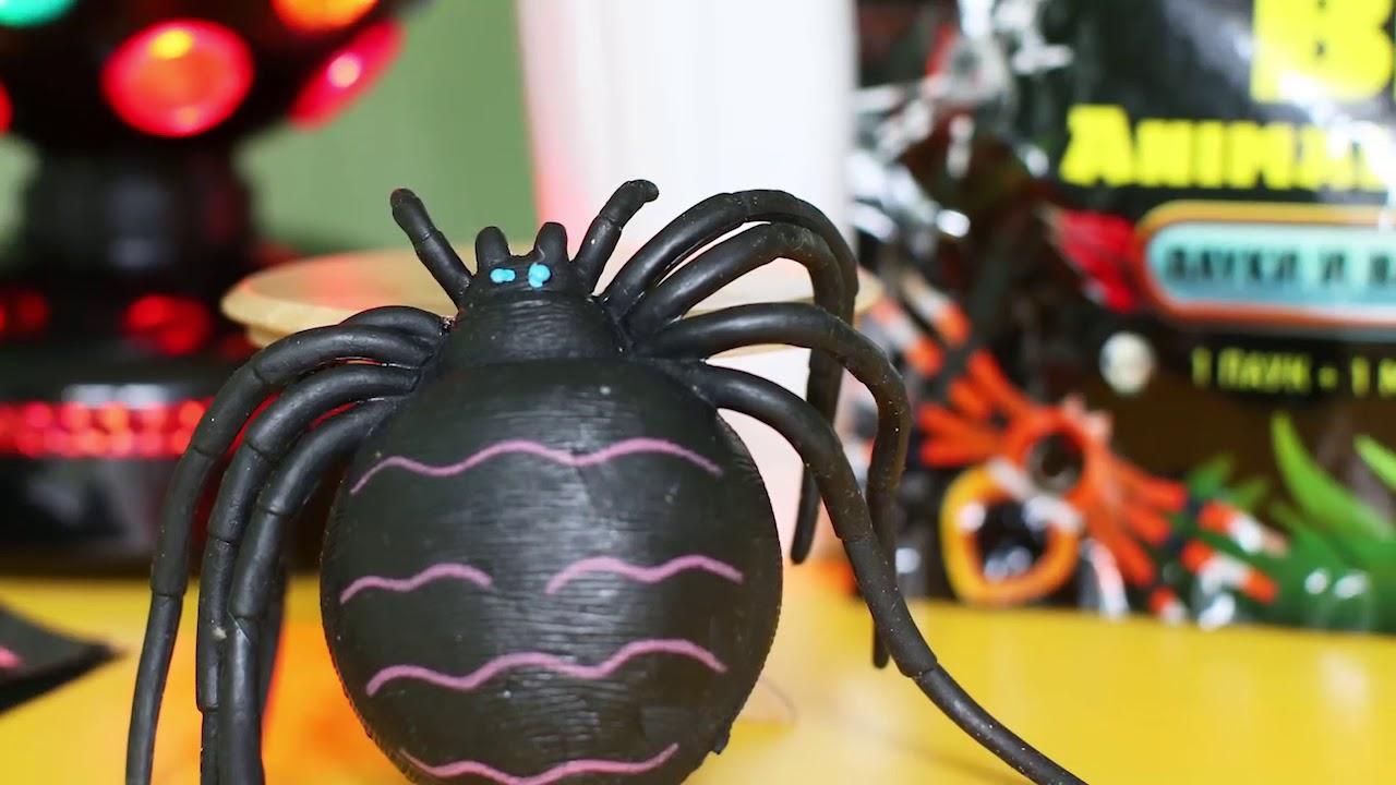 Big Animal World Пауки и насекомые: огромная чёрная вдова!