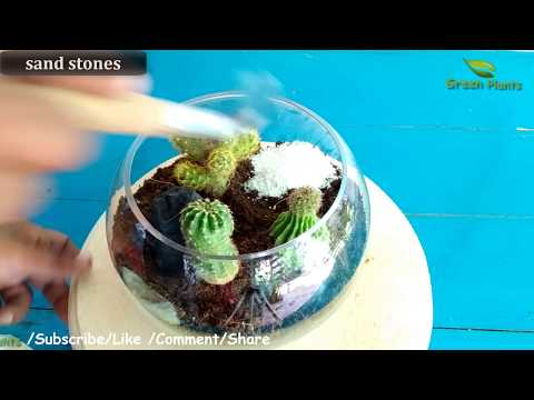 How to Make a DIY Terrarium at Home Very Easy Method//GREEN PLANTS