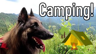 Belgian Shepherd Dog on a Camping Trip   My Awesome Vacation!