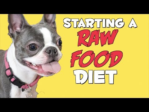 Starting a RAW FOOD diet for my Boston Terrier Puppy