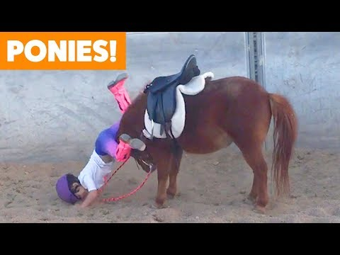 Funniest and Cutest Ponies | Funny Pet Videos