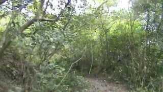 烏來西坑林道