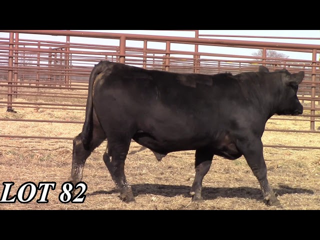 Mead Angus Farms Lot 82