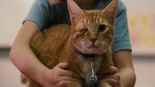 Мэри показывает своего одноглазого кота Фреда. Одаренная. 2017.
