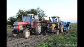 Kopanie ziemniaków 2017☆U-R-S-U-S- C-360&Bolko Z643 w akcji☆ ---Mafia 1224---