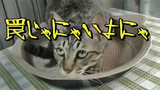我が家は猫、里親猫、保護猫を3匹飼っています。のの、きらら、こころ...