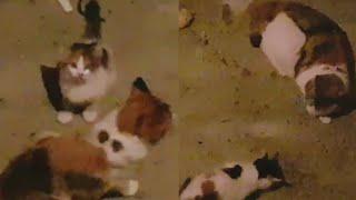 어미 길고양이 중순! 새끼고양이를 데려오다!