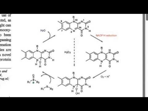Biochem - Riboflavin