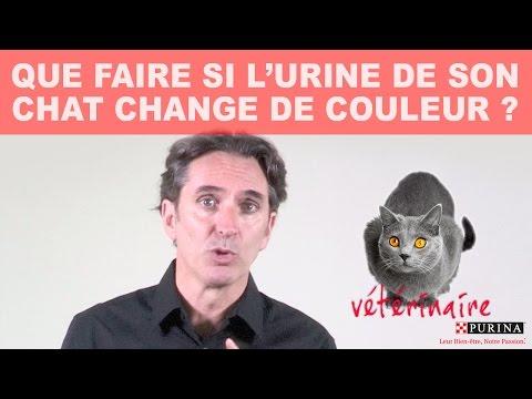 Que Faire Si L'urine De Son Chat Change De Couleur ?