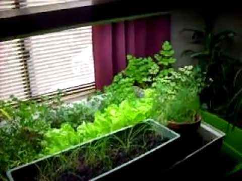 how to grow spinach aquaponics