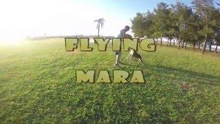 Pitbull Flying