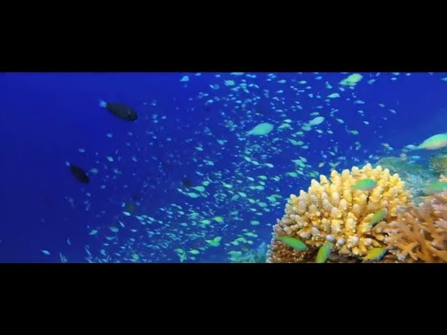 Marine Protected Areas, 2nd theme of the 2017 #OurOcean conference