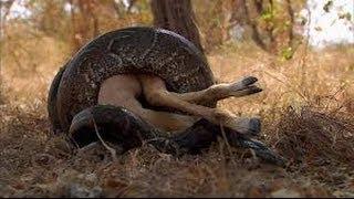 Самые опасные животные в мире 2014 ТОП 10 Самых опасних животных на Земле 1