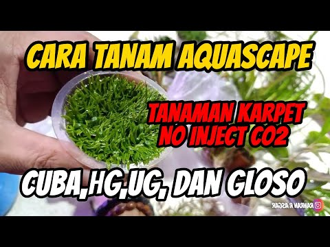 #ranggaek3---proses-planting-tanaman-karpet-dan-stemplant-aquascape