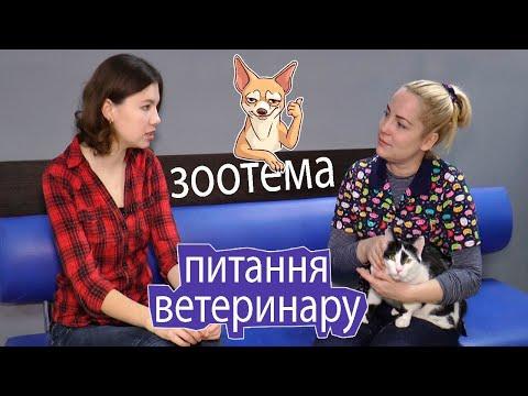 KorostenTV: KorostenTV_04-12-20_ЗООтема: Ветеринар відповідає на питання - 4