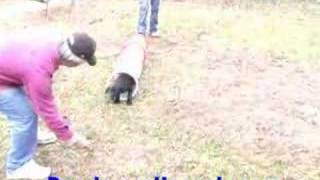 Puppy Training Tunnel Obstacle With Maryland Dog Trainer
