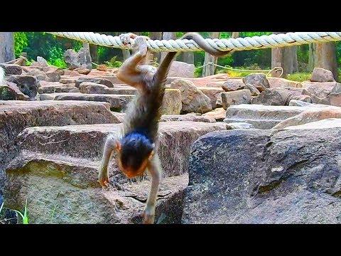 Amazing baby Maci do amazing action bravo girl  Monkey Post