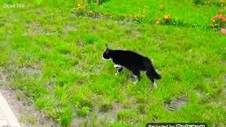 КОШАКИ В ДЕЛЕ ! Кошки против собак