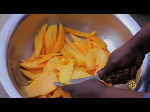 هذا الصباح- المانجو الفاكهة الأشهر في مالي  - نشر قبل 2 ساعة