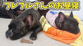 黒フレブルの二人は一緒に寝ます… 犬のひみつきちホームページ:http://...