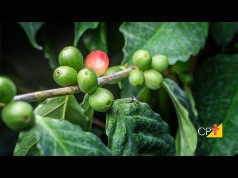 Clique e veja o vídeo Curso Pragas do Cafeeiro - Reconhecimento e Controle