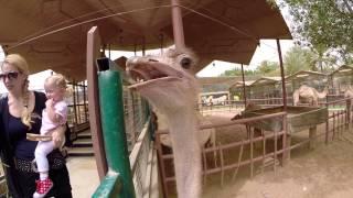 Lucy & Family mit Mark im Abu Dhabi Zoo