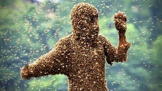 Killer Bees Sting Woman 1,000 Times!!!