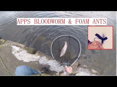 Fly Fishing Foam Ants & Apps Bloodworm | Pennine Trout Fishery UK