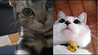 猫ちゃんの自撮りが見ているだけで、愛おしくて癒される♡~The cat's se...
