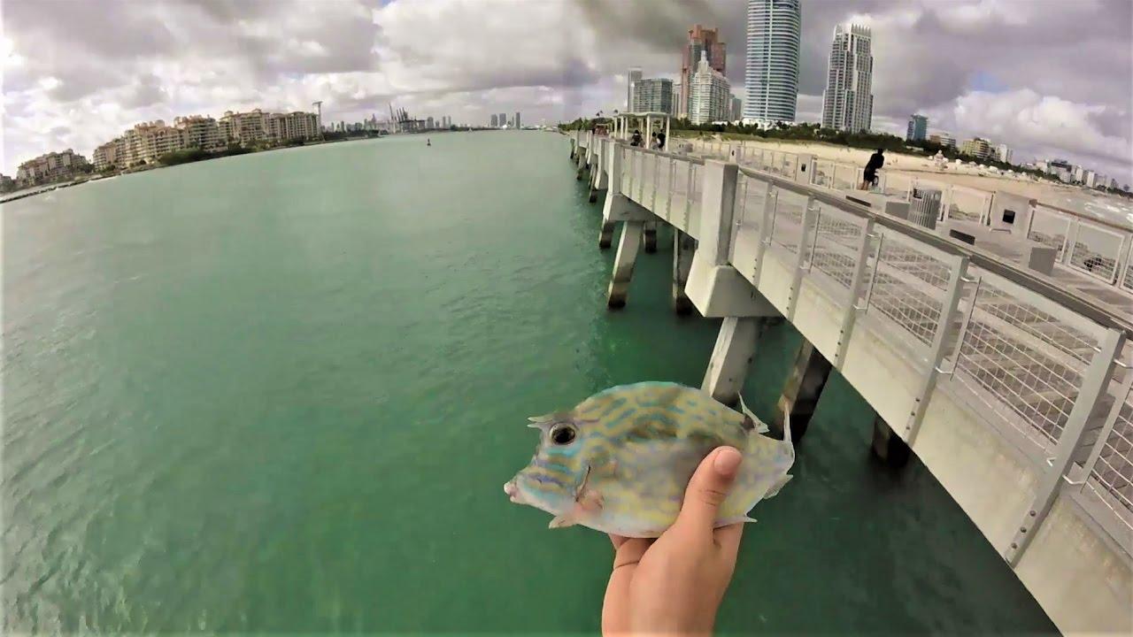 Fishing In Miami 1 South Beach Bridge Vlog