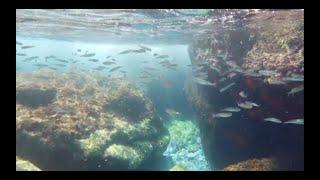 스페인 남부 물고기 구경 (ft.오즈모 포켓 방수케이스…