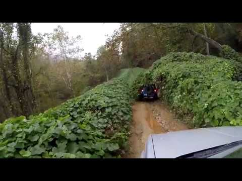 Walker Creek rd Kudzu