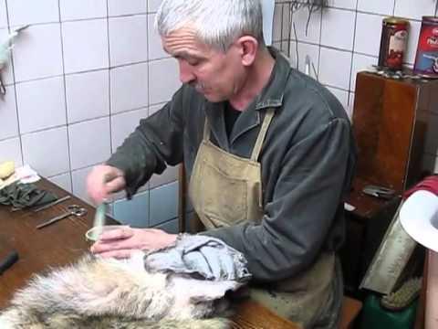 Выделка шкур лисы домашних условиях