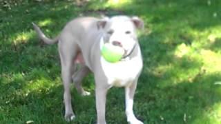 Bailey Squeaky Ball